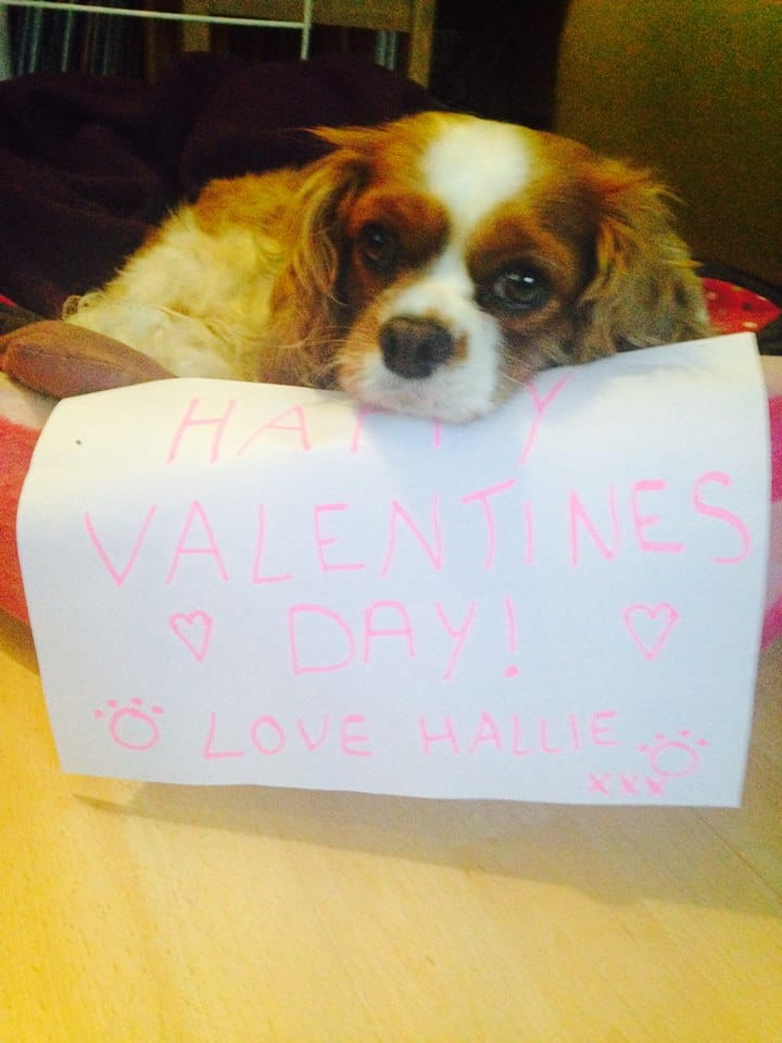 Valentine's Message from a Dog